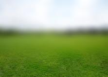 Grassy plain (tilt-shift) (3981 x 2554)